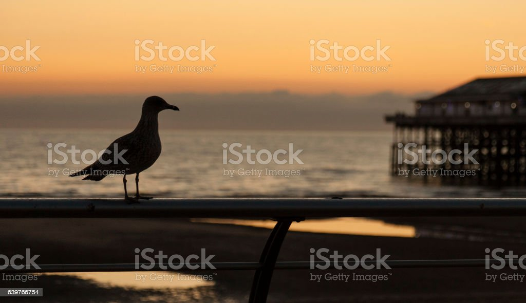 lonely seagull stock photo