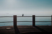 Peaceful seaside scene, seagull on a fence in front of calm blue sea, ship sailing in the background.