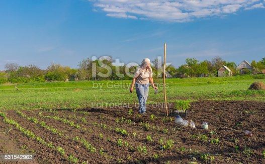 istock Lonely senior woman planting tomato 531542962