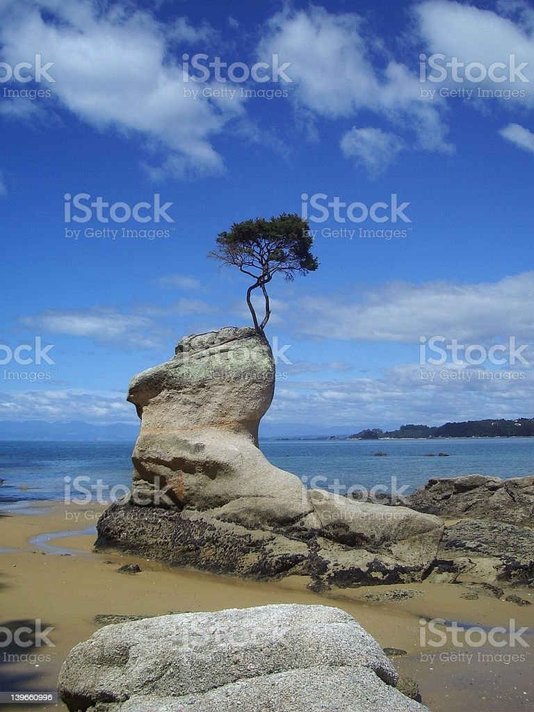 Lonely small tree stock photo