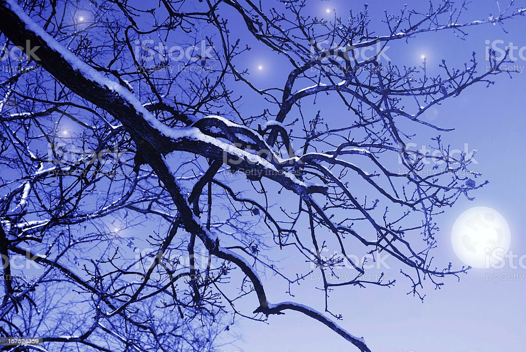 Lonely snowy branch in magic night royalty-free stock photo
