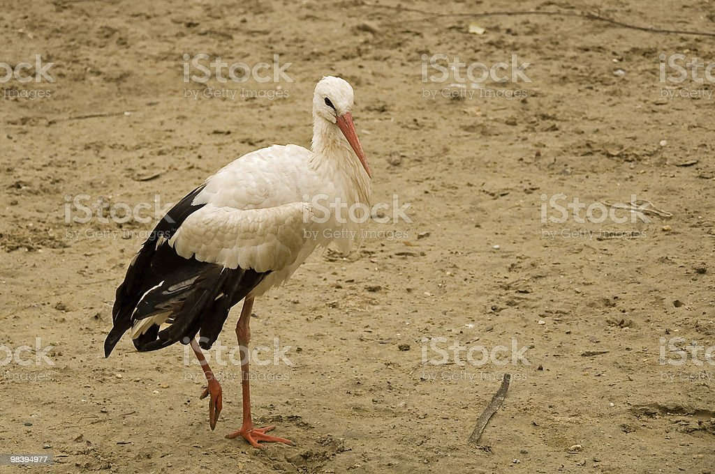 Lonely stork royalty-free stock photo