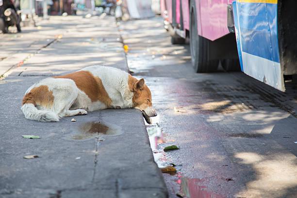 lonely stray sleep dog on the street - dog looking at floor path stockfoto's en -beelden
