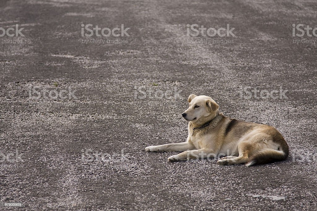 lonely street dog royalty-free stock photo