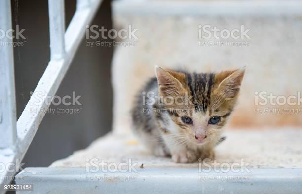 Lonely sweet kitten on stairs picture id928931454?b=1&k=6&m=928931454&s=612x612&h=xn8jgrdw5jlypzeqteitjr0ucsquoux3w4bi2jredfa=