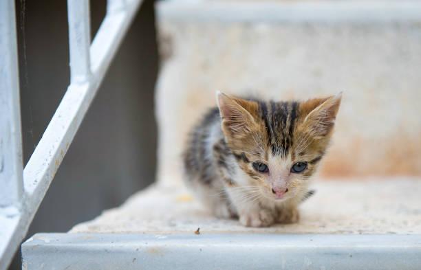 Lonely sweet kitten on stairs picture id928931454?b=1&k=6&m=928931454&s=612x612&w=0&h=p  b9vpf6k5utnxug6ytmwuowpqqxkhtbccm4 jyapc=