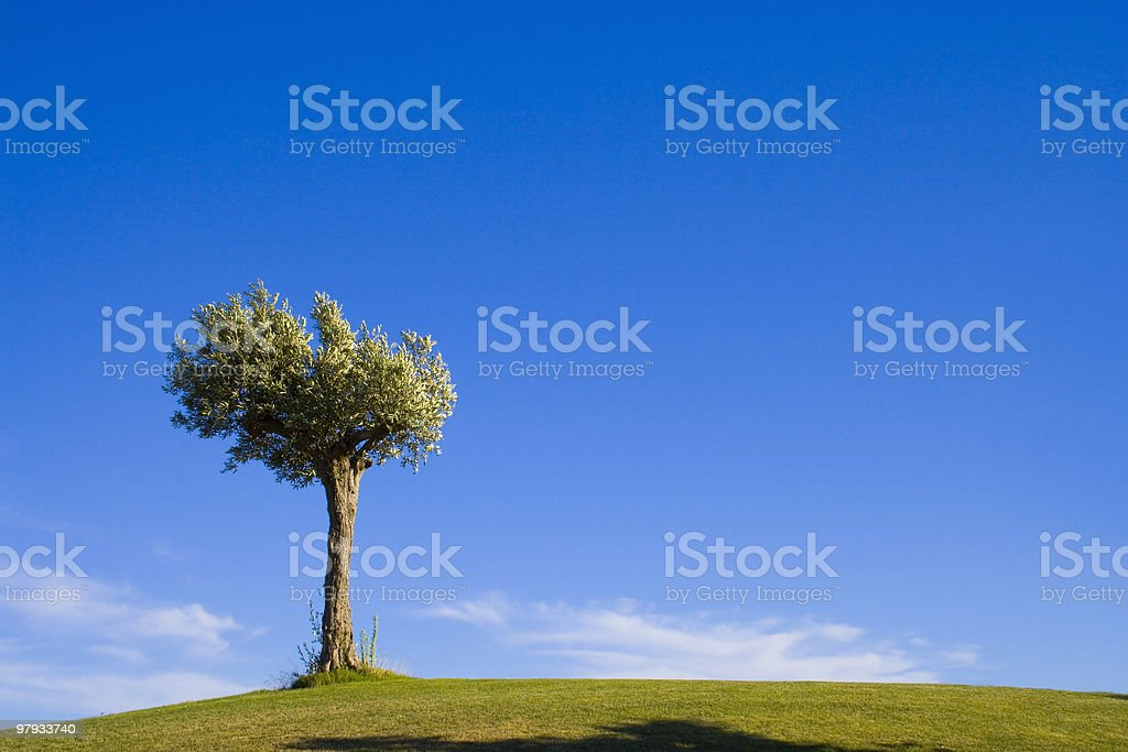 lonely tree 10 royalty-free stock photo