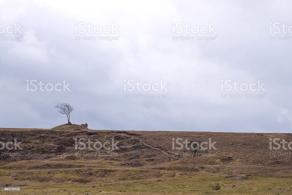 Lonely Tree - 1215 royalty-free stock photo
