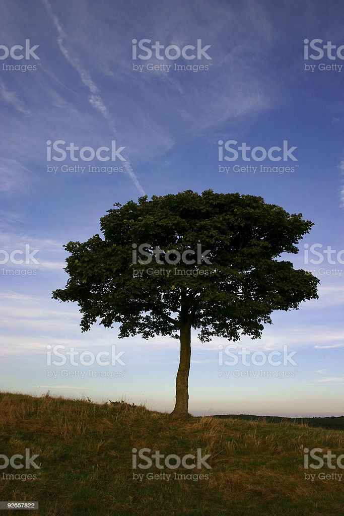 lonely tree against streaky blue sky royalty-free stock photo
