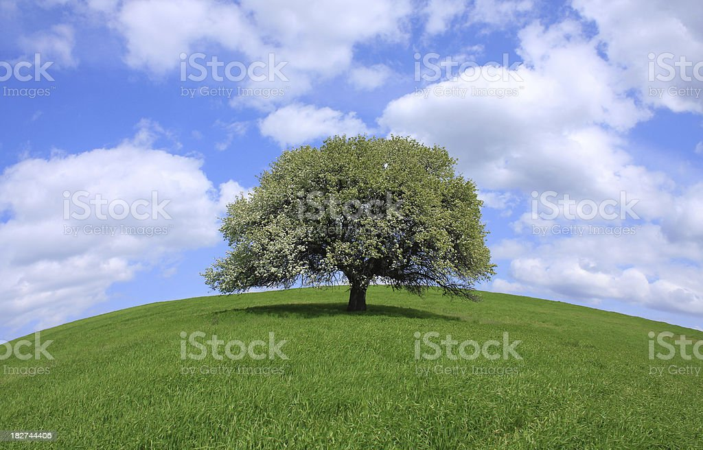 lonely tree and blue sky royalty-free stock photo