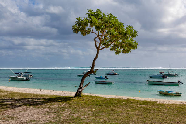 lonely tree and boats on flic en flac beach, mauritius island lonely tree and resting boats on flic en flac beach on mauritius island in africa. côte d'ivoire stock pictures, royalty-free photos & images