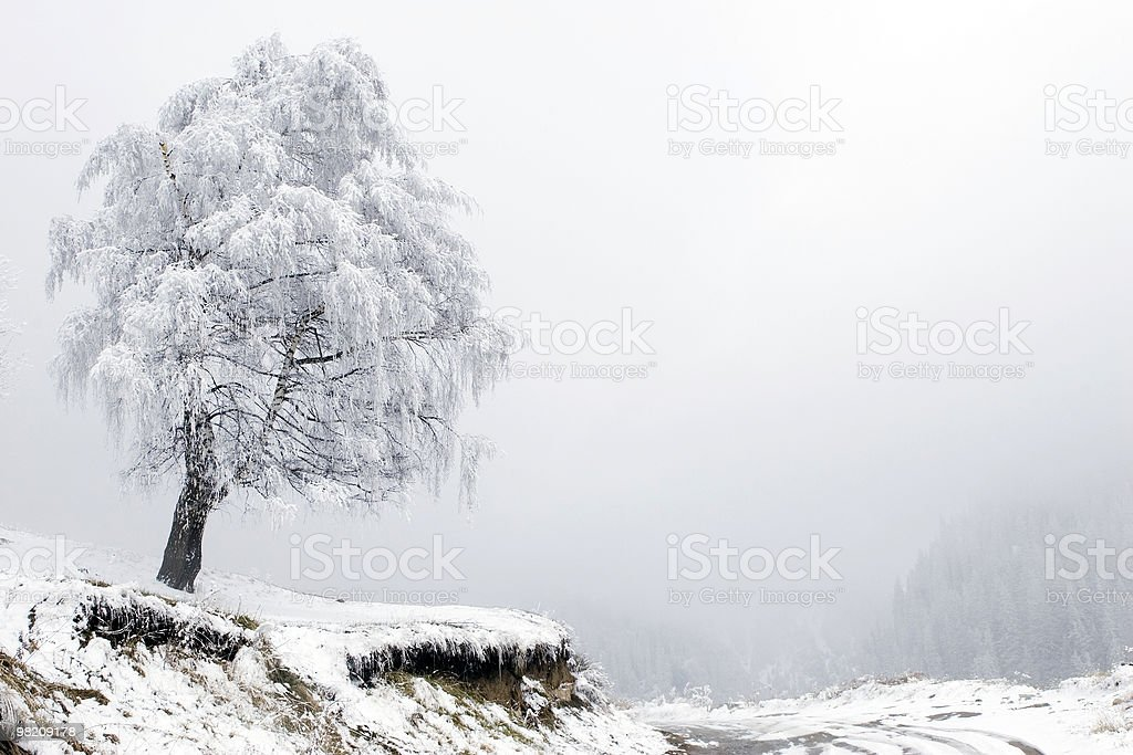 Lonely tree and road in fog at mountain Tien Shan royalty-free stock photo
