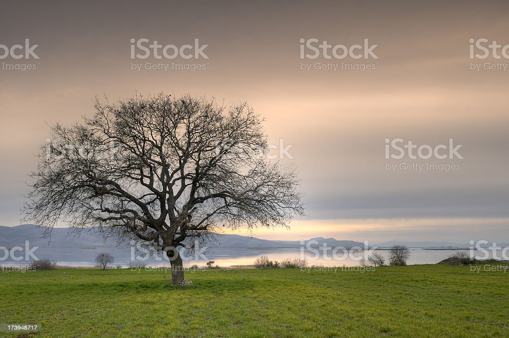 Lonely Tree And Sunset, Isikli Lake, Civril, Denizli, Turkey stock photo