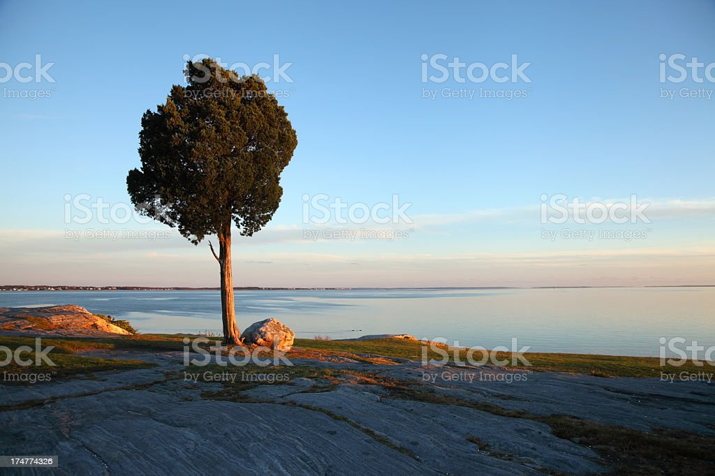 Lonely tree at Dusk stock photo