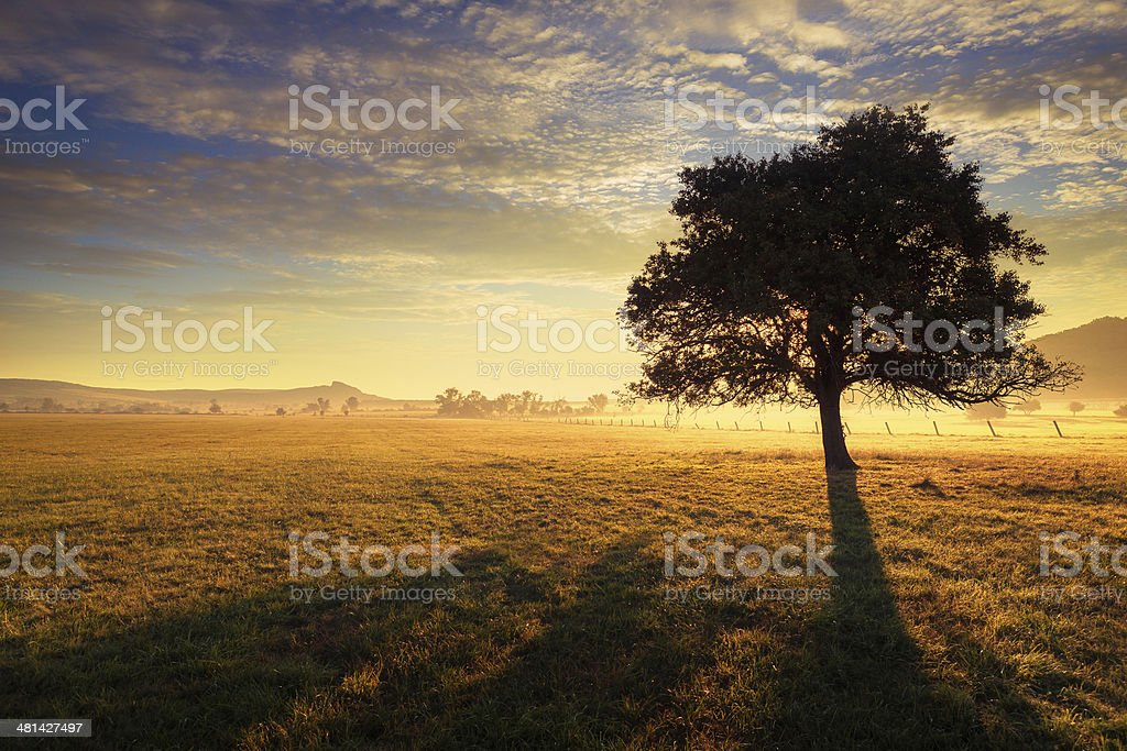 Lonely tree at sunrise stock photo