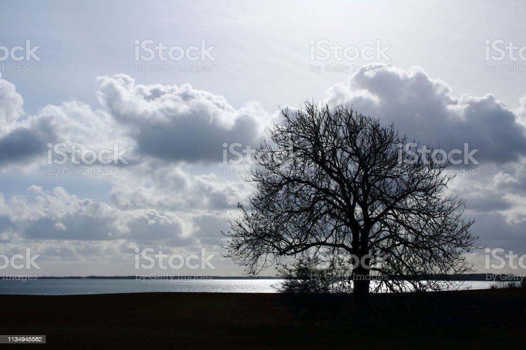 Lonely tree by the sea stock photo