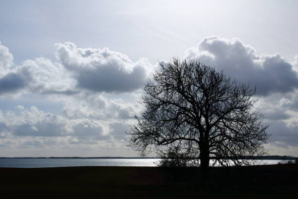 lonely tree by the sea - pejft stock photos and pictures