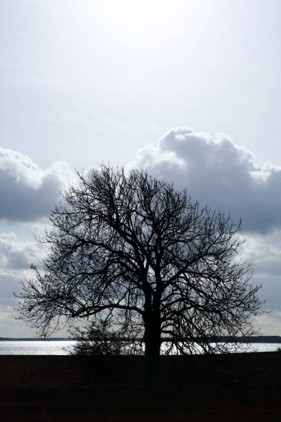 Lonely tree by the sea A lonely tree by the sea pejft stock pictures, royalty-free photos & images