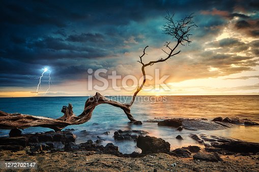 Tree branch off Kona beach at sunset during storm.