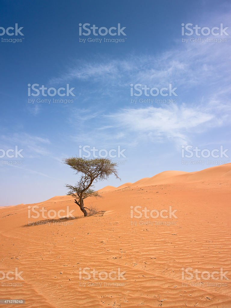 Lonely Tree Desert Sand Dune Sultanate of Oman stock photo