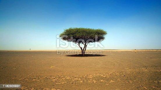 A tree with leaves growing lonely against the background of the desert and blue sky during the daytime sunshine