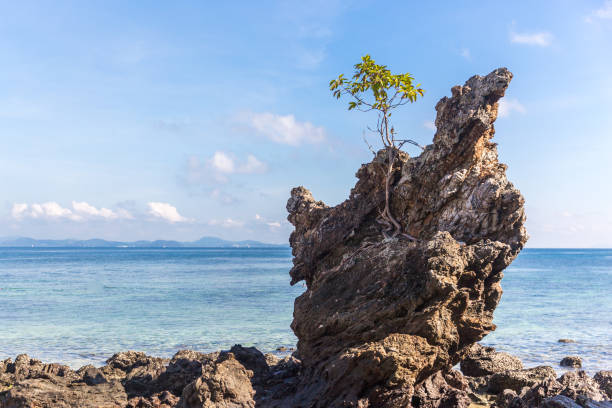 Lonely tree growing on a cliff stock photo