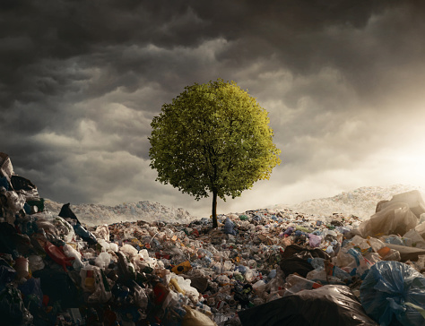 Lonely tree growing on the garbage dump