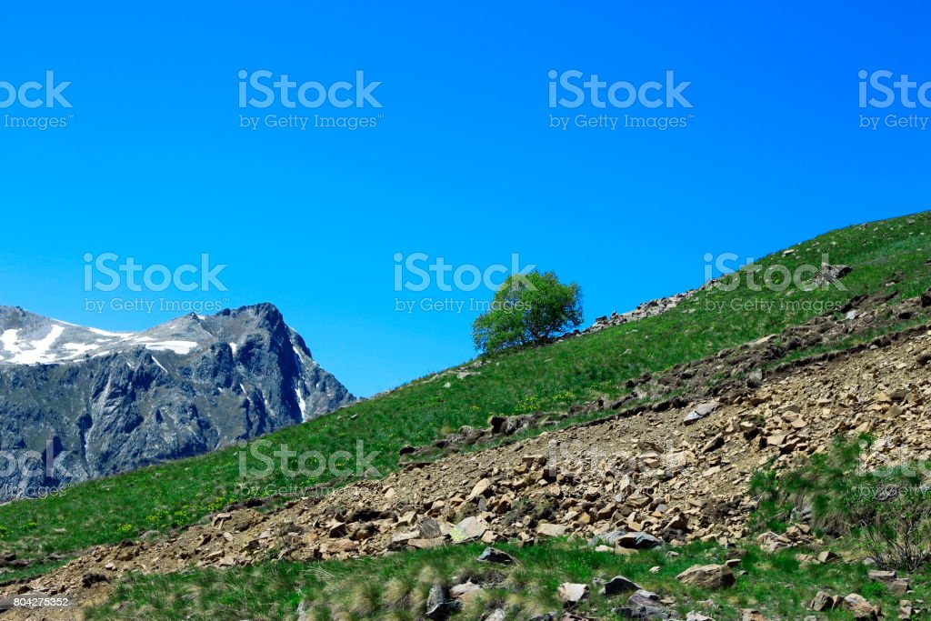 Lonely tree growing on the slope of the mountain stock photo
