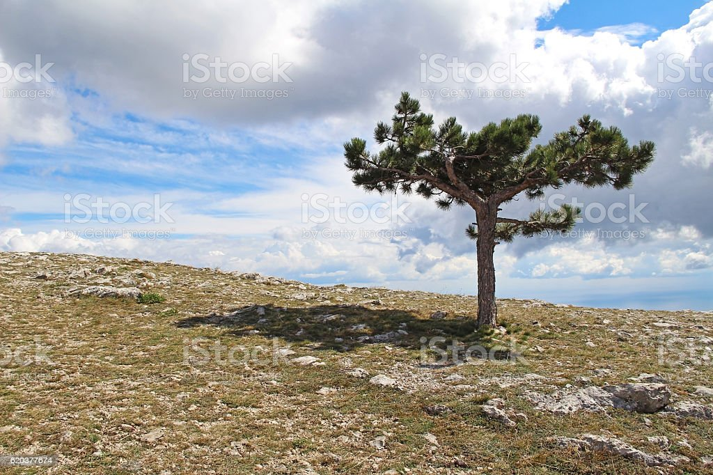 Lonely tree growing on top of the rock. Crimea, Russia. foto de stock royalty-free
