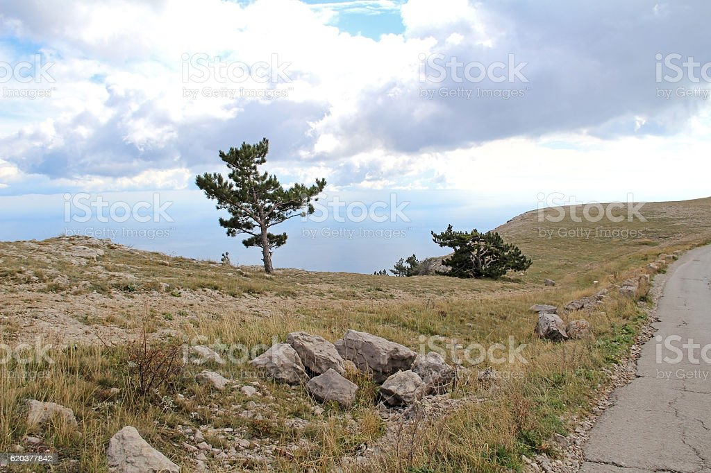 Lonely tree growing on top of the rock. Crimea, Russia. zbiór zdjęć royalty-free