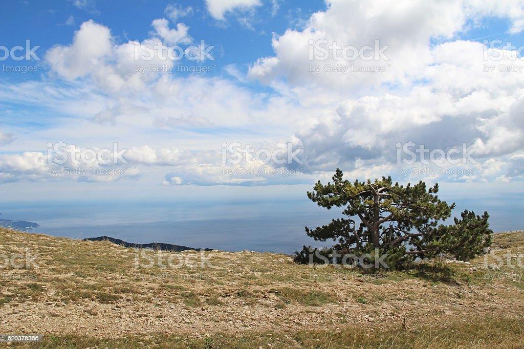 Lonely tree growing on top of the rock. Crimea, Russia. zbiór zdjęć royalty-free