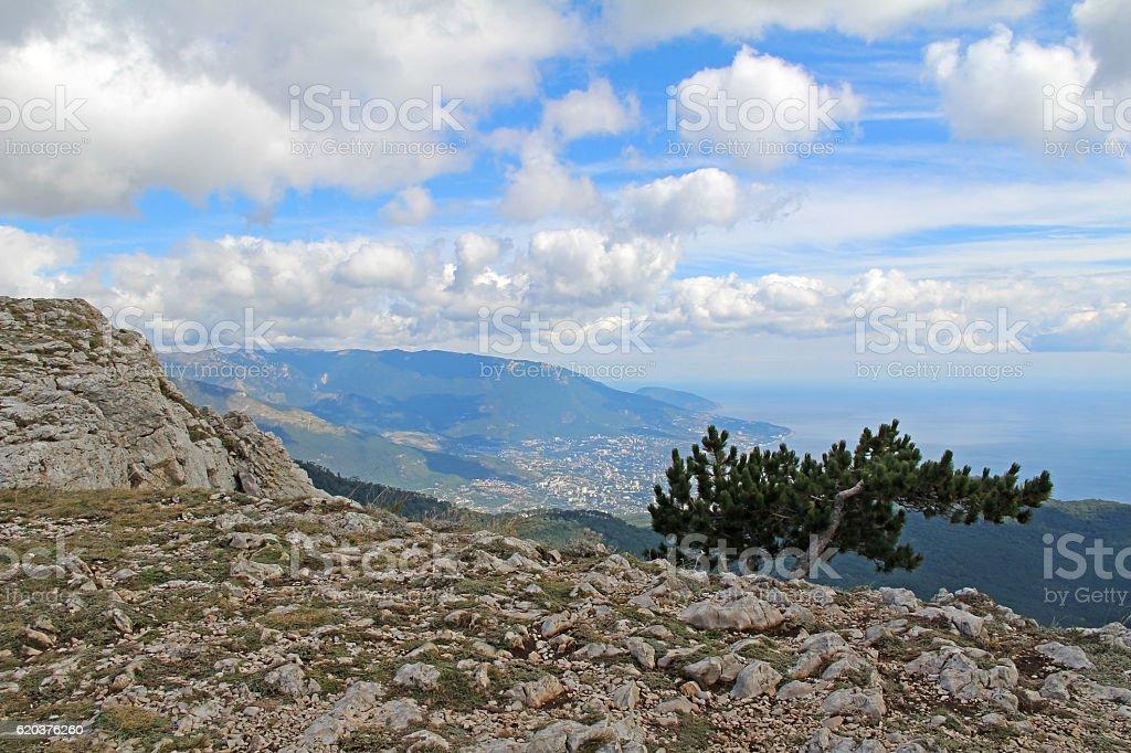 Lonely tree growing on top of the rock. Mount Ai-Petri. zbiór zdjęć royalty-free