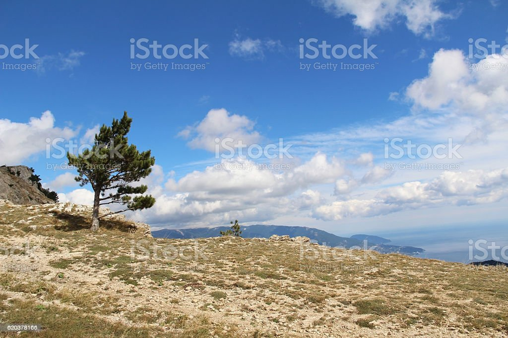 Lonely tree growing on top of the rock. Mount Ai-Petri. foto de stock royalty-free