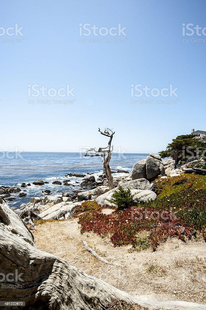 Lonely tree Highway 101 stock photo