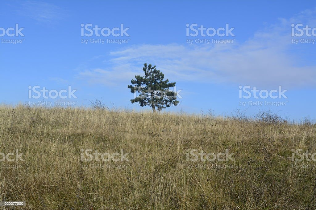 lonely tree in a meadow zbiór zdjęć royalty-free