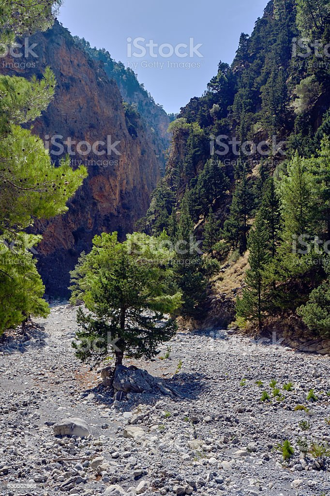 Lonely tree in a rocky riverbed stock photo
