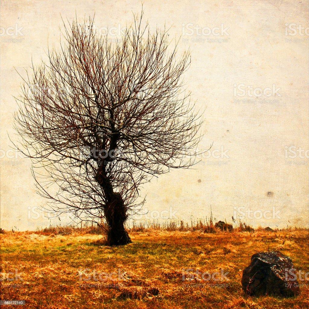 외로운 나무 세 질감된 예술 배경에서. 우울증과 우울 분위기입니다. 추상적인 외로움과 슬픔 누추한와 빈티지 효과 royalty-free 스톡 사진