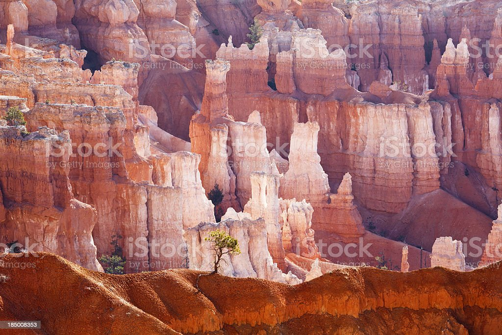 Lonely Tree in Bryce Canyon royalty-free stock photo