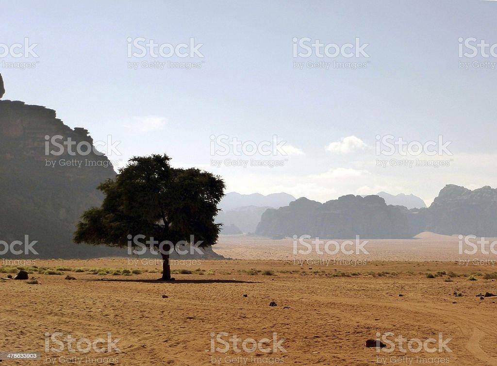 Lonely Tree in Desert, Jordan stock photo