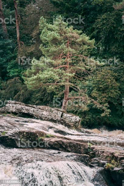 Lonely tree in flowing water picture id1183398657?b=1&k=6&m=1183398657&s=612x612&h=w50wuzvwyvxgwa0jddj3axv3xnmsxw0xipy9 w7ux5a=