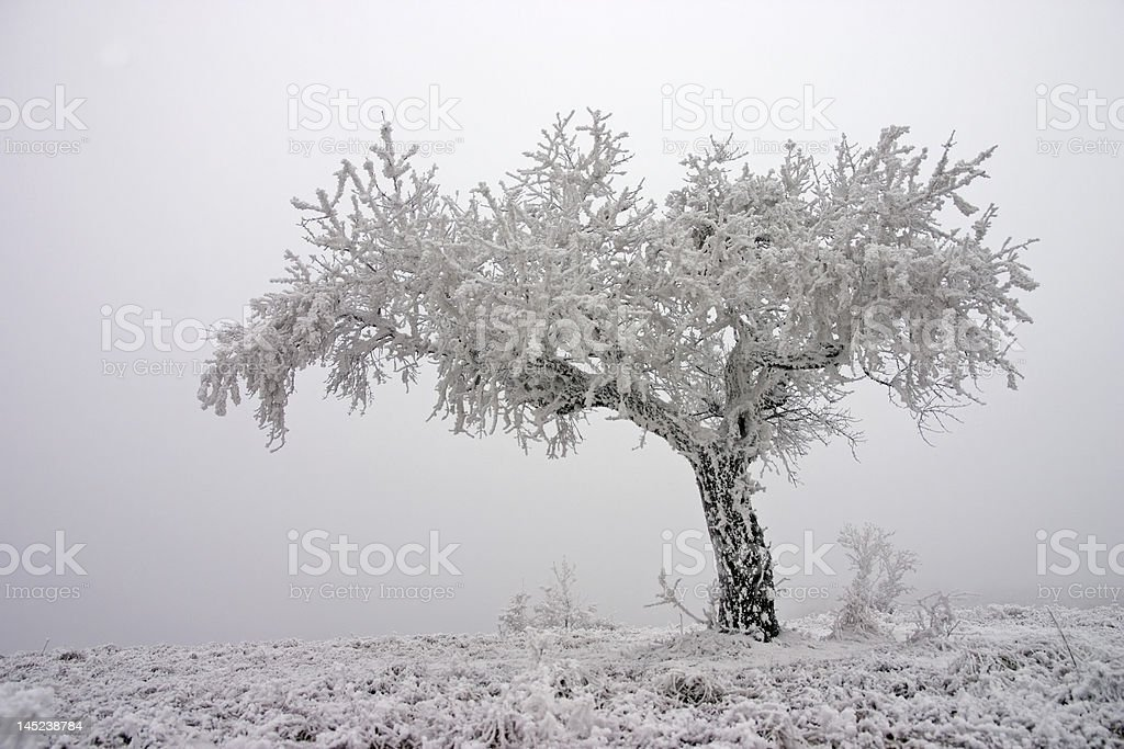 lonely tree in fog stock photo