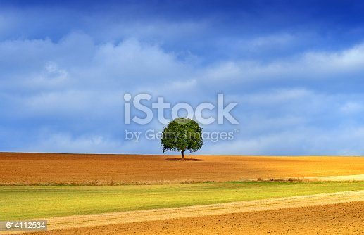 a single tree on a meadow in germany