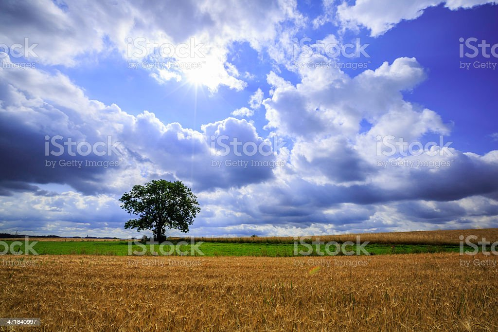 lonely tree in green field royalty-free stock photo