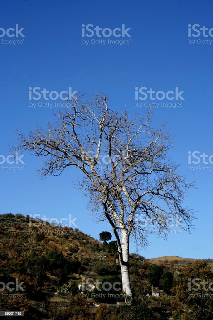 lonely tree in landscape royalty free stockfoto