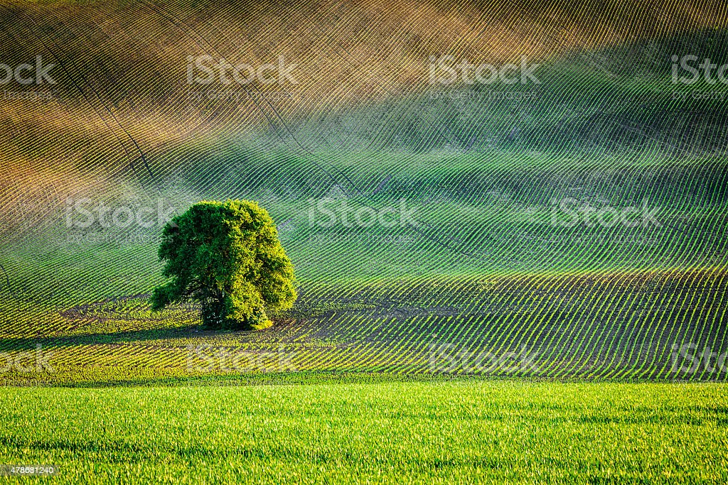 Lonely tree in ploughed field stock photo
