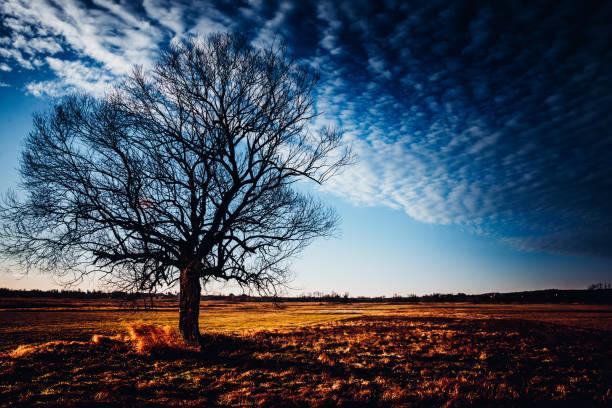 Samotne drzewo na Ponidziu – zdjęcie