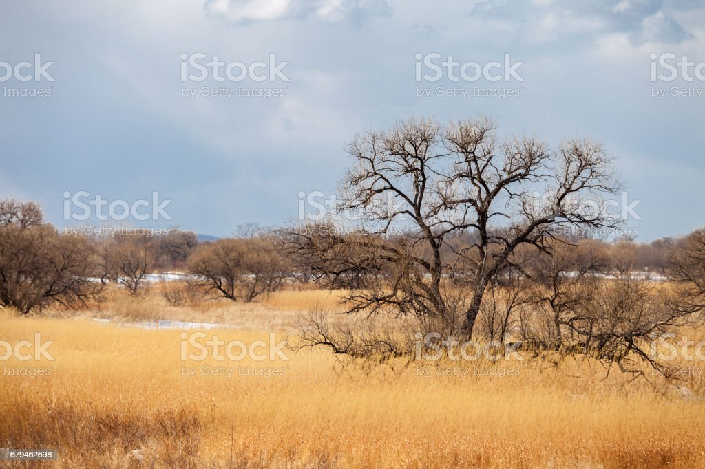 Lonely tree in spring field royalty-free stock photo