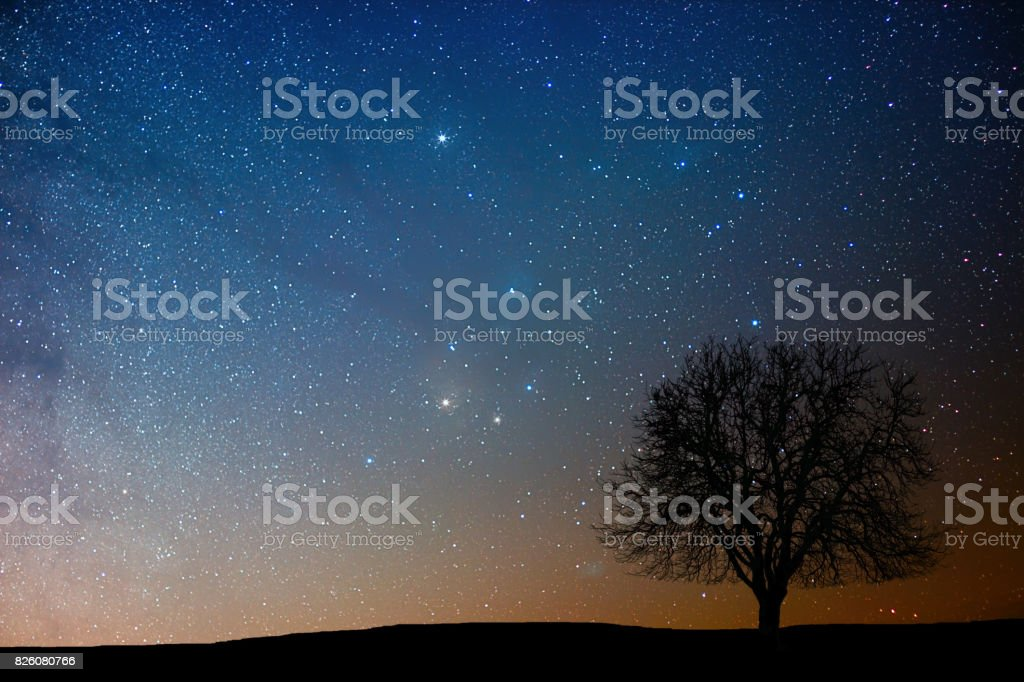 Lonely tree in starry night. Antares region. stock photo