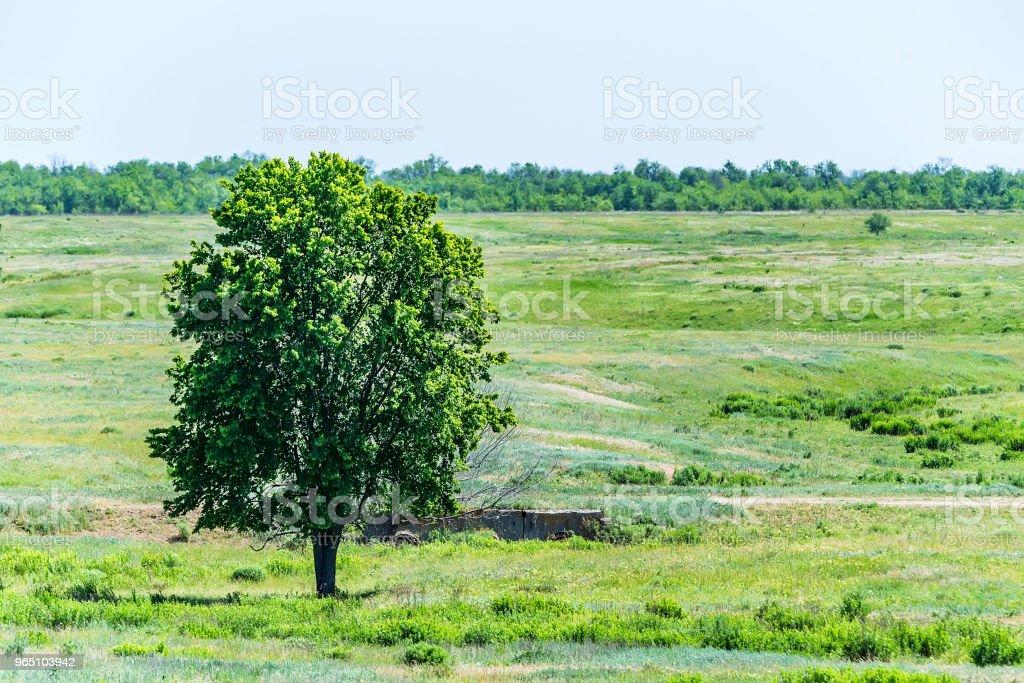 Lonely tree in summer steppe beautiful landscape zbiór zdjęć royalty-free