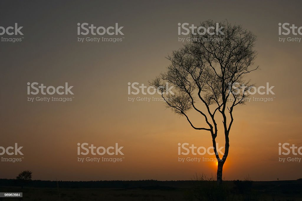 Lonely tree in sunset royalty-free stock photo